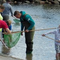 Børnefamilieaktivitet - livet på det lave vand