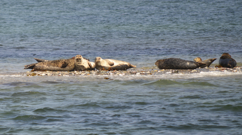 Samsø sæl safari