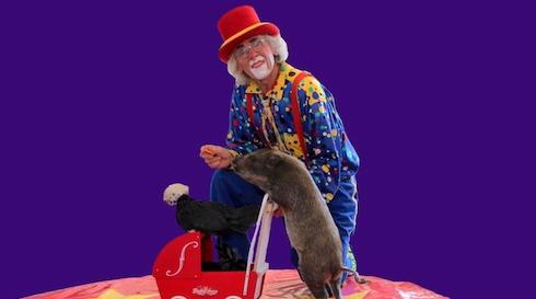 Cirkus Bella Donna