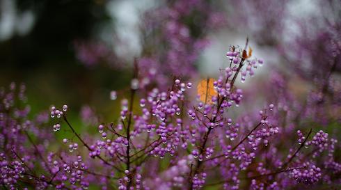 Rundvisning i Botanisk Have: Vores vinternatur - fra Danmark til troperne